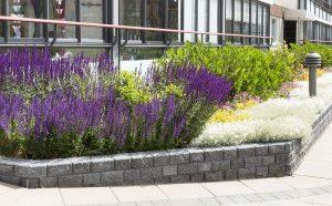 Här har vi planterat lågväxande buskar framför fönstren. Så att man inte behöver klippa och beskära.