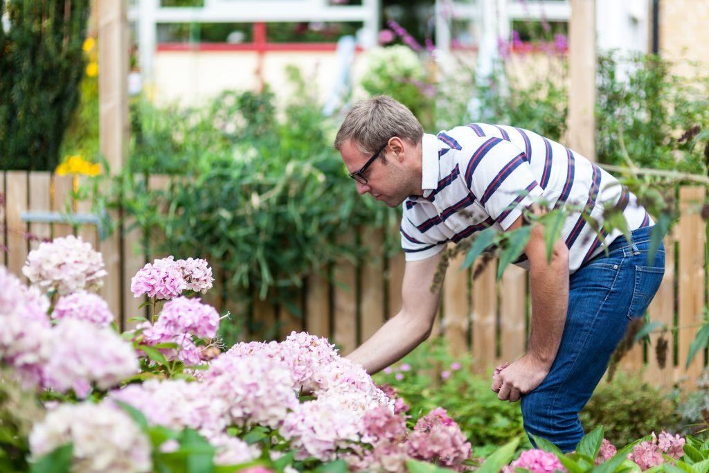 Kim Andersson tittar till hortensiabuskarna som sparats från den gamla utemiljön och som ska återanvändas.